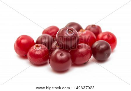 eating, raw, freshness cranberries on a white background