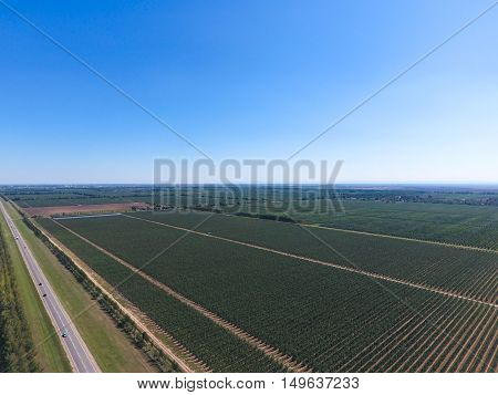 Rows Of Trees In The Garden. Aerophotographing, Top View.