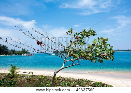 Sea Almond tree with ocean and beautiful sky background Phuket Thailand