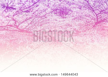 the abstract colorful leaf beautiful pattern background