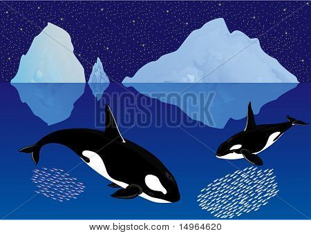 Whales among the icebergs