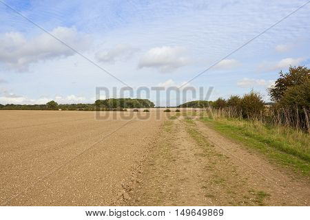 Cultivated Soil With Hedgerow