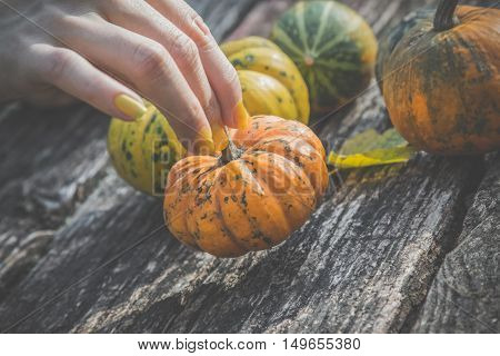 Close up of female hand holding gourd at the table outdoors. Other pumpkins in the background. Autumn symbols concept.