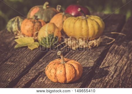 Gourds in different colors on the table. Autumn symbols concept.