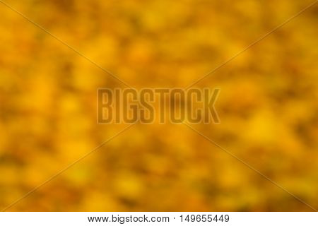 Abstract defocused yellow golden colored leaves background. Autumn season.