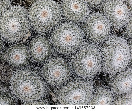 Outdoor Cactuses Background.