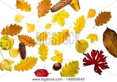 colorful autumn leaves on white background. The fallen leaves top view.