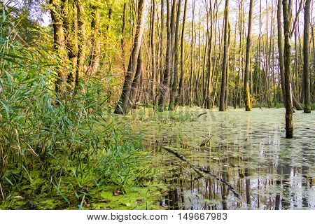 a lot of trees in a moor bog