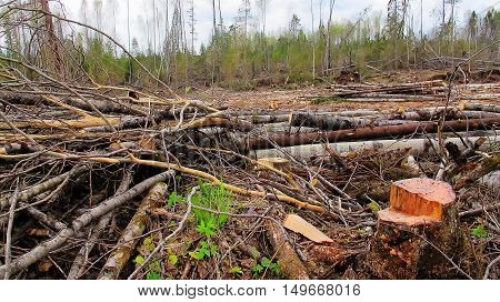 The destroyed forest loggers environmental disaster. deforestation