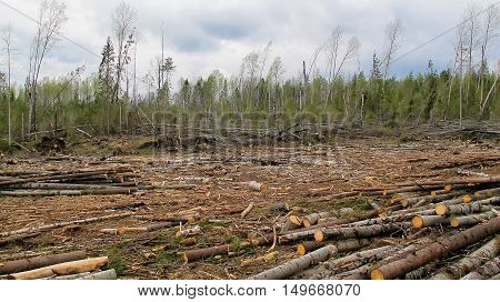 a environmental disaster. deforestation in the russian
