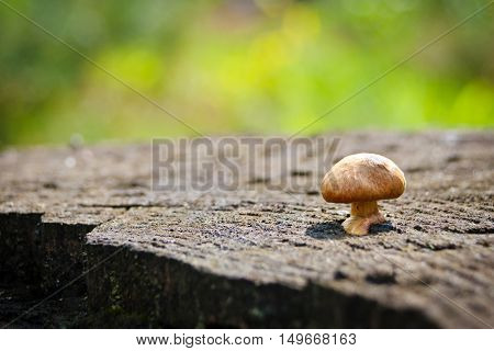 small tasty mushroom growing on a tree stump