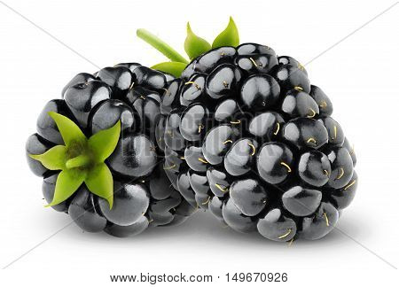 Two Isolated Blackberries