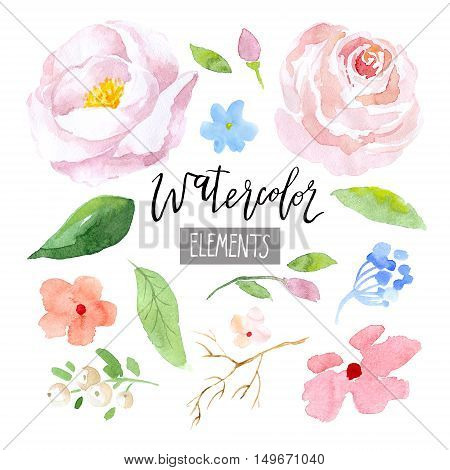 Watercolor floral elements. Flowers, leaves and brunches on white