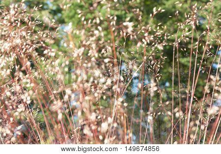 Abstract nature background - dried herbs on meadow on a sunny summer day.