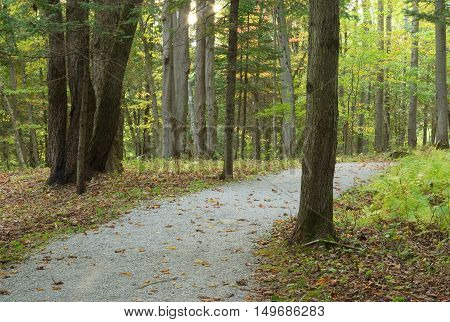 forest path fall landscape trees tranquil scene