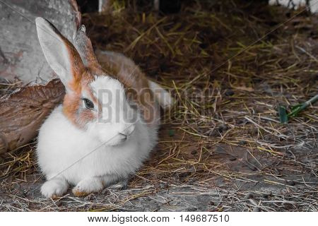 Rabbit On The Straw.