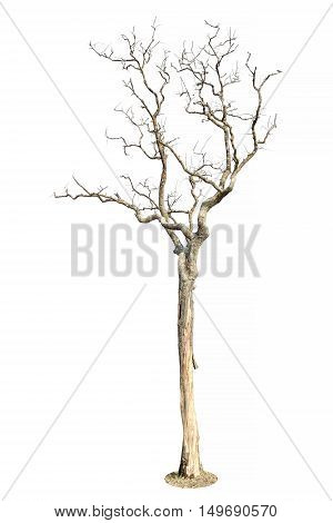 Dry Tree Isolated Tree on white background. Tree object element for design.