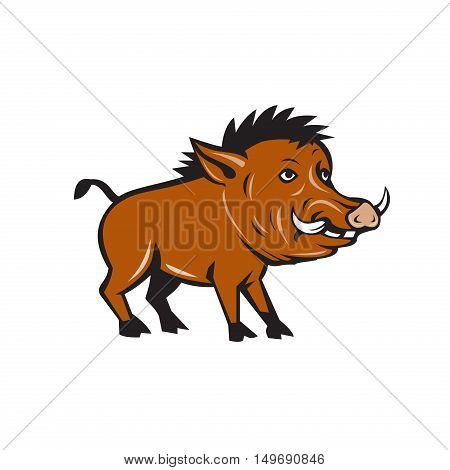 Illustration of a wild pig boar razorback viewed from the side set on isolated white background done in cartoon style.