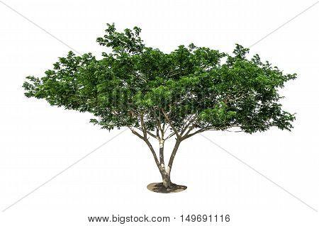 Big Tree, Tree Isolated On White Background