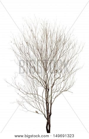 dry tree isolated on white background. Tree object for design