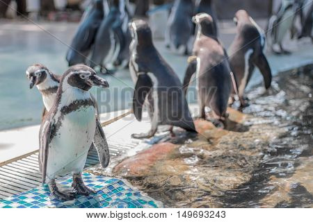 Penguins Stand On The Tiles
