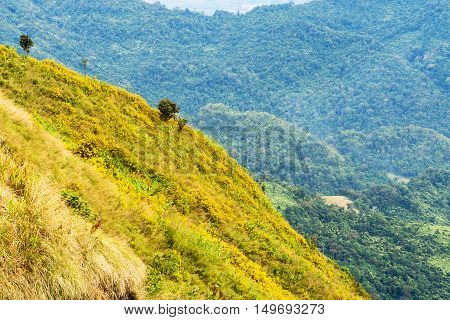 Defocus of mountain landscape with yellow flowers on hill in winter.