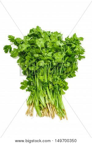 Bundle of fresh green coriander leaves with roots on a light background. Isolation.