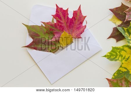 Open white envelop and colourful autumn leaves on white background. Close up. Autumn concept. Copy space for text