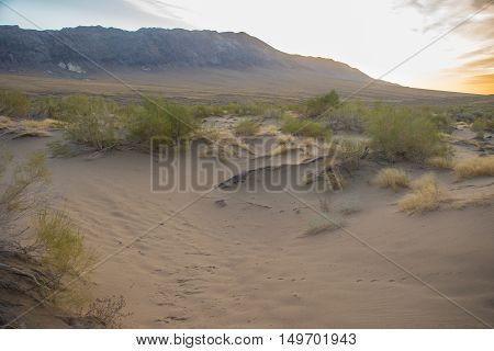 Morning in the sands and dunes in national park