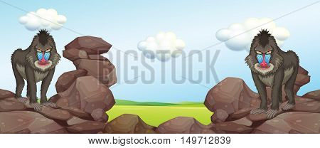 Two baboons standing on rocks illustration
