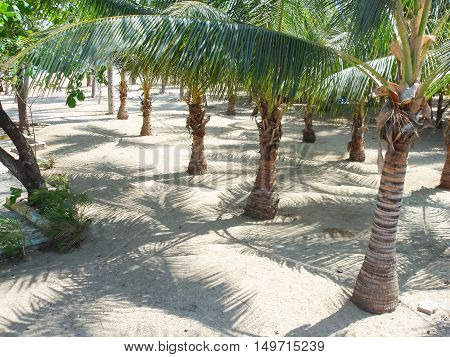 Palm trees on the beach of Acapulco Mexico.