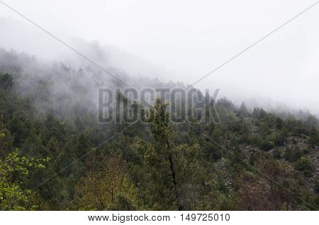 Damp misty weather in the mountains, the fog slowly descends on the mountain slopes and trees