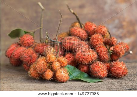 Forest Fruit, Uvaria Rufa Blume Fruit, Herb Rare And Endangered Species In Thailand