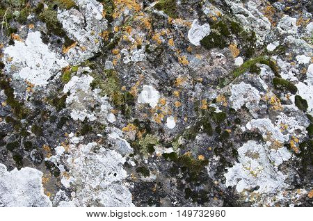 The surface of the rock is covered with a whimsical pattern of cracks, moss and lichen