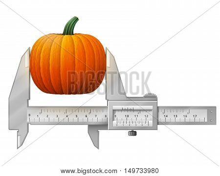 Horizontal caliper measures pumpkin fruit. Concept of winter squash and measuring tool. Vector illustration for agriculture vegetables cooking halloween gastronomy thanksgiving olericulture etc