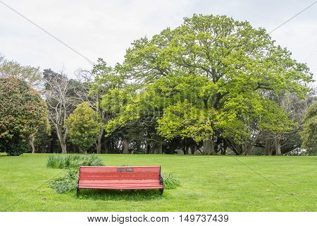 tree in park, auckland, new zealand