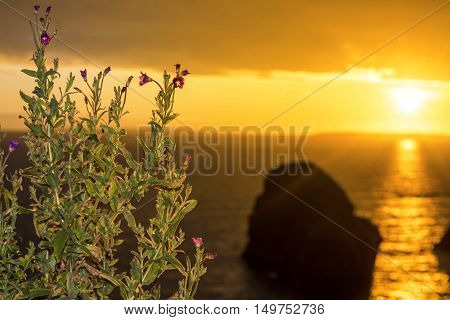 beautiful sunset over the virgin rock with wild flowers on the wild atlantic way