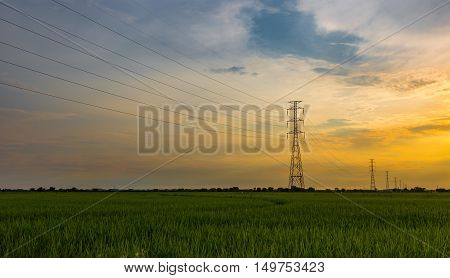 High voltage electrical transmission line and tower in rice field during sunset