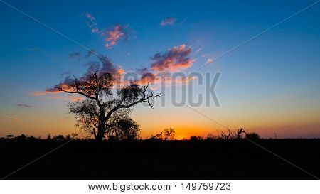 Colorful Sunset In The African Bush. Acacia Trees Silhouette In Backlight. Kruger National Park, Fam