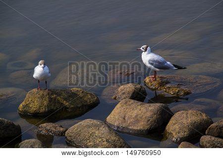 Two seagulls walk seaside creative sky decorative beach natural