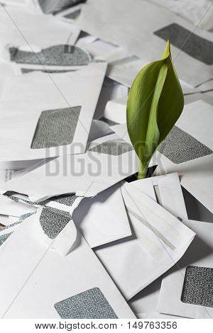 fresh green plant growing through uses envelopes