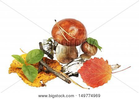Autumn application of fungi and leaf isolated on white background