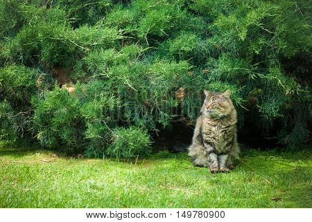 Cat quiet and relaxed sitting on green field with close eyes