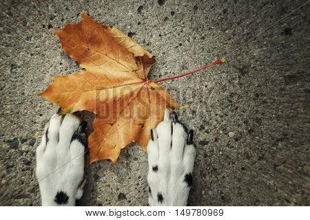 Autumn. Dog laying near the leaf -- toned picture with motion blur