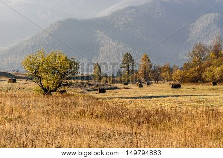 Beautiful autumn golden landscape with haystacks on the field and trees on the background of mountains