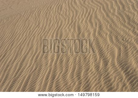 Lines Of Sand Grain Waves