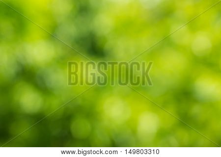 Abstract Natural Green Color Background.