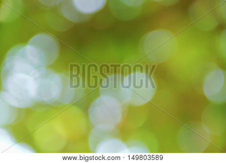 Bokeh natural color background colorful leaf of the tree fresh green abstract blurred foliage and bright summer sunlight with copy space
