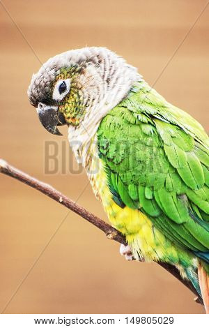 Beautiful colorful parrot on the tree branch. Detail bird portrait. Vertical composition. Beauty in nature.