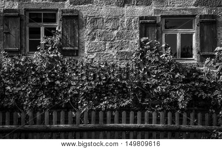 Vintage german house facade - Black and white image with the facade from a traditional german house half covered with vines